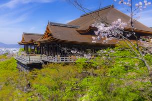 桜咲く春の清水寺の写真素材 [FYI04308295]
