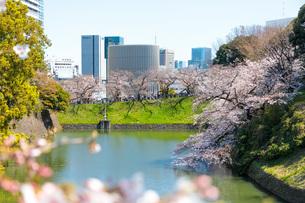 千鳥ヶ淵と満開の桜の写真素材 [FYI04308384]