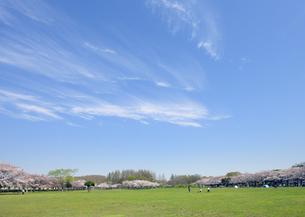 桜の咲くみさと公園の写真素材 [FYI04308389]