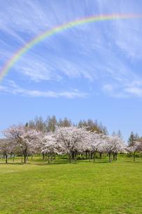 虹とサクラの咲くみさと公園の写真素材 [FYI04308390]