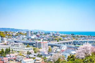 春の小田原の街の写真素材 [FYI04308431]