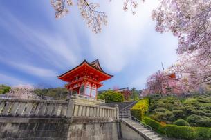 春の桜と清水寺の仁王門の写真素材 [FYI04308437]