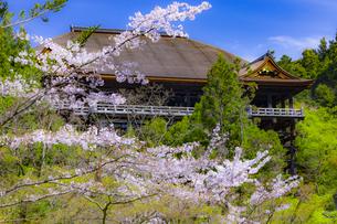 桜咲く春の清水寺の写真素材 [FYI04308492]