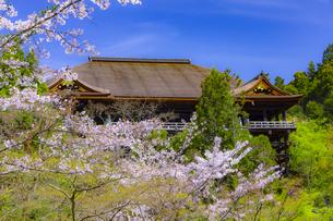 桜咲く春の清水寺の写真素材 [FYI04308493]