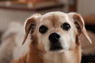 犬①の写真素材 [FYI04308505]
