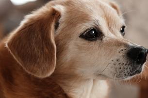 犬②の写真素材 [FYI04308508]