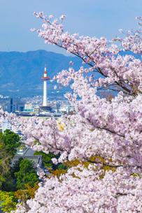 桜と京都タワーの写真素材 [FYI04308541]