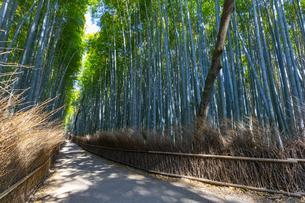 京都の竹林の小径の写真素材 [FYI04308550]