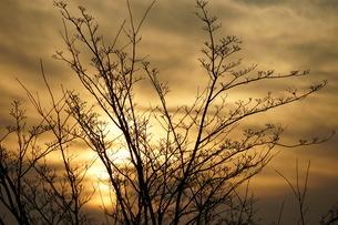 夕暮れと植物のイメージの写真素材 [FYI04308775]
