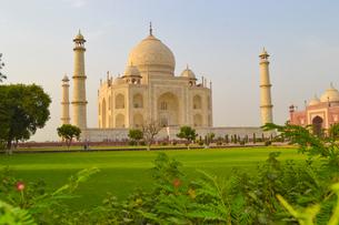 タージマハルのイメージ(インド・アグラ)の写真素材 [FYI04308866]