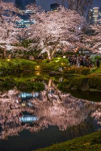 毛利庭園の夜桜の写真素材 [FYI04308951]