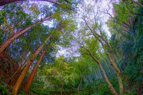 神奈川県鎌倉の竹林イメージの写真素材 [FYI04308975]