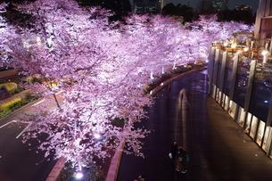 夜桜のイメージの写真素材 [FYI04308989]