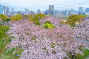 福岡市舞鶴公園の桜とビル街の写真素材 [FYI04309220]