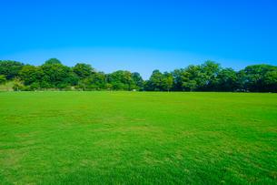 一面の芝生が広がる金沢城新丸広場の写真素材 [FYI04309376]