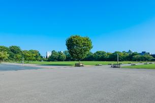 金沢城新丸広場の一本木の写真素材 [FYI04309382]