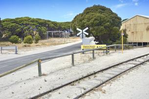 オーストラリア・西オーストラリア州のフリーマントルの沖合約18kmのインド洋に浮かぶロットネスト島の木々と草に囲まれた中にあるトロッコ電車の線路の光景の写真素材 [FYI04309394]
