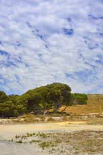 オーストラリア・西オーストラリア州のフリーマントルの沖合約18kmのインド洋に浮かぶロットネスト島の木々と草が続く中にあるトロッコ電車の線路の光景と白い雲の写真素材 [FYI04309395]