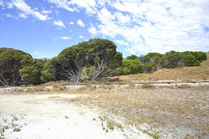 オーストラリア・西オーストラリア州のフリーマントルの沖合約18kmのインド洋に浮かぶロットネスト島の木々と草が続く中にあるトロッコ電車の線路の光景と白い雲の写真素材 [FYI04309396]