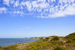 オーストラリア・西オーストラリア州のフリーマントルの沖合約18kmのインド洋に浮かぶロットネスト島の木々と白い雲とボートの光景の写真素材 [FYI04309414]