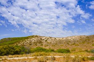 オーストラリア・西オーストラリア州のフリーマントルの沖合約18kmのインド洋に浮かぶロットネスト島の木々と白い雲の光景の写真素材 [FYI04309417]