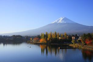 河口湖の湖畔にある紅葉の大池公園と世界文化遺産の富士山の写真素材 [FYI04309442]