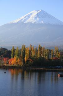 河口湖の湖畔にある紅葉の大池公園と世界文化遺産の富士山 の写真素材 [FYI04309444]