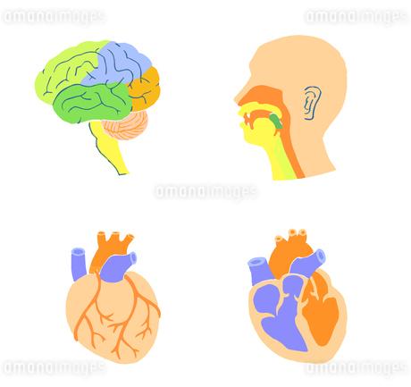 脳 心臓 口腔のイラスト素材 [FYI04309486]