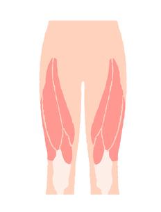 腿の筋肉のイラスト素材 [FYI04309510]