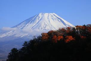 紅葉の本栖湖から眺める世界文化遺産の富士山の写真素材 [FYI04309731]