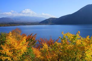 紅葉の本栖湖から眺める世界文化遺産の富士山の写真素材 [FYI04309735]