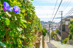 神戸市 垂水区高台から海の見える町並みの写真素材 [FYI04310197]