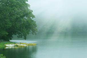 美しい光の新緑の湖畔と黄色いボートの写真素材 [FYI04310345]