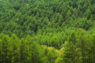 信州 長野県小県郡長和町美ケ高原の初夏 信州里山の新緑の写真素材 [FYI04310357]