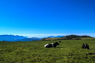 信州 長野県小県郡長和町美ケ高原の電波塔と美ヶ原牧場の牛の写真素材 [FYI04310371]