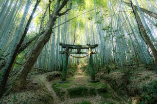 静寂の森の写真素材 [FYI04310437]