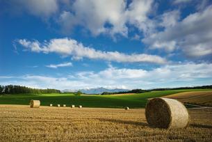 夏の収穫期にみられる美瑛の麦稈ロールの写真素材 [FYI04310462]