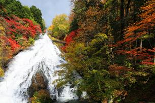 紅葉の奥日光湯滝の写真素材 [FYI04310928]