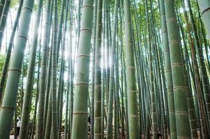 竹林の写真素材 [FYI04311078]