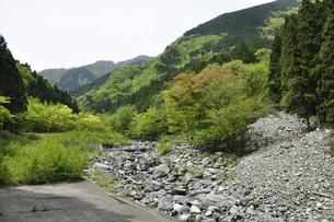 西丹沢 春の日蔭沢の写真素材 [FYI04311201]