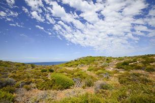 オーストラリア・西オーストラリア州のフリーマントルの沖合約18kmのインド洋に浮かぶロットネスト島の草が茂る丘と白い雲のある光景の写真素材 [FYI04311279]