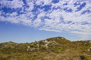 オーストラリア・西オーストラリア州のフリーマントルの沖合約18kmのインド洋に浮かぶロットネスト島の木々と草と雲のある光景の写真素材 [FYI04311302]