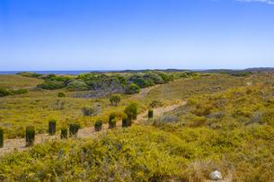 オーストラリア・西オーストラリア州のフリーマントルの沖合約18kmのインド洋に浮かぶロットネスト島の木々と草と苗床の並ぶ光景の写真素材 [FYI04311308]