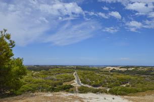 オーストラリア・西オーストラリア州のフリーマントルの沖合約18kmのインド洋に浮かぶロットネスト島の木々と草と道のある光景の写真素材 [FYI04311325]