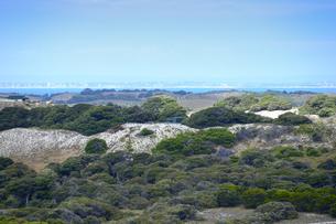 オーストラリア・西オーストラリア州のフリーマントルの沖合約18kmのインド洋に浮かぶロットネスト島の木々と海のある光景の写真素材 [FYI04311332]