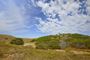 オーストラリア・西オーストラリア州のフリーマントルの沖合約18kmのインド洋に浮かぶロットネスト島の丘に生える沢山の草木と白い雲の光景の写真素材 [FYI04311353]