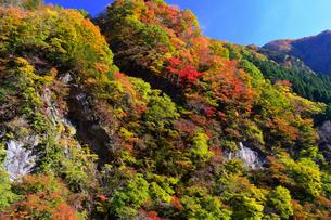 大血川渓谷の紅葉の写真素材 [FYI04311417]
