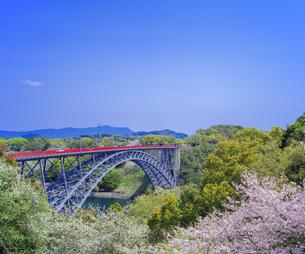 長崎県 桜 西海橋 (西海橋公園) の写真素材 [FYI04311547]