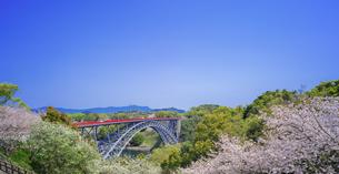 長崎県 桜 西海橋 (西海橋公園) の写真素材 [FYI04311552]