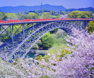 長崎県 桜 西海橋 (西海橋公園) の写真素材 [FYI04311553]